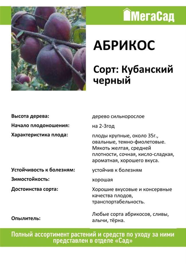 Абрикос Кубанский черный: особенности выращивания черного абрикоса