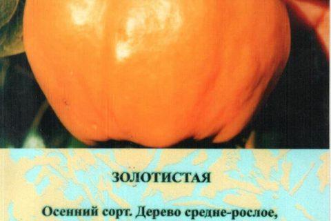 Айва Золотистая — описание, отзывы, посадка и уход — Журнал «Совхозик»