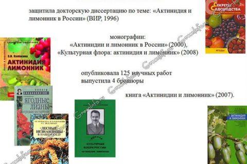 Актинидия коломикта «Памяти Колбасиной»