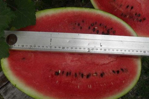 Арбуз сорта Атаман: описание и характеристика, выращивание и уход, особенности плода, фото