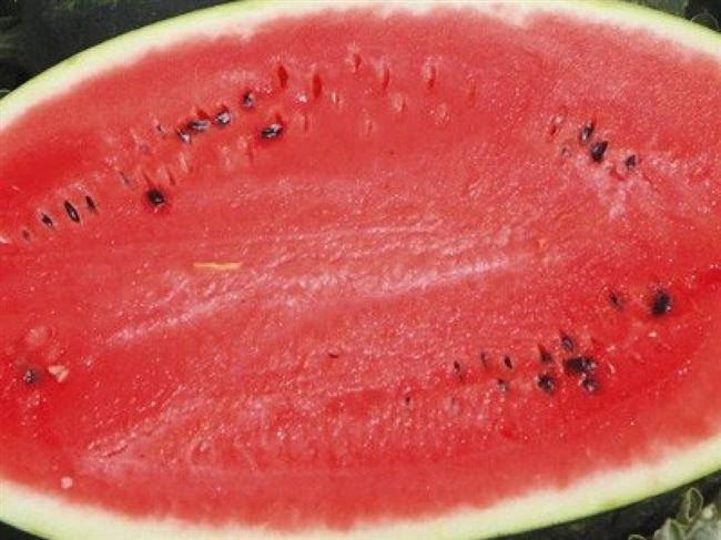 Мирсини F1 семена арбуза тип кр.св. среднераннего 75-78 дн. 8-10 кг овал. (Syngenta)