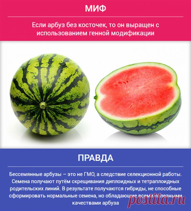 Описание гибридов арбузов без косточек, особенности выращивания и уход