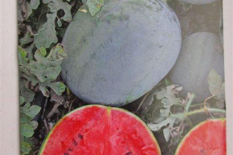Семко 2003 — сорт растения Арбуз
