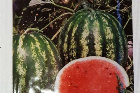 Гибриды и сорта арбузов для средней полосы России и секреты их выращивания