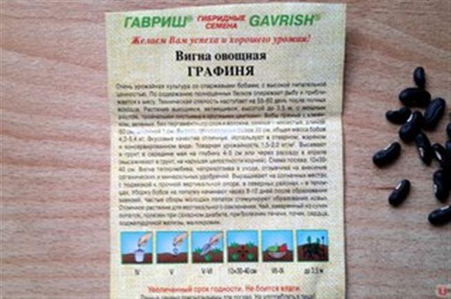 Что такое вигна овощная? Нюансы выращивания сорта «Графиня» в Подмосковье и средней полосе России