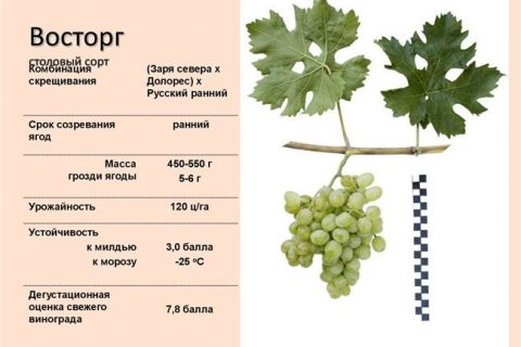Сорт винограда Алиготе (Пино сепаж x Gouais Blanc) — согласно анализа ДНК Синонимы: Бонуа (Beaunois), Верт блан (Vert Blanc), Giboudot Blanc,