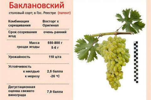 Описание сорта винограда Баклановский