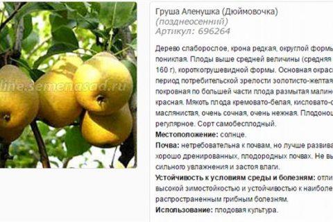 Груша Дюймовочка (Аленушка): описание сорта, фото, отзывы, опылители