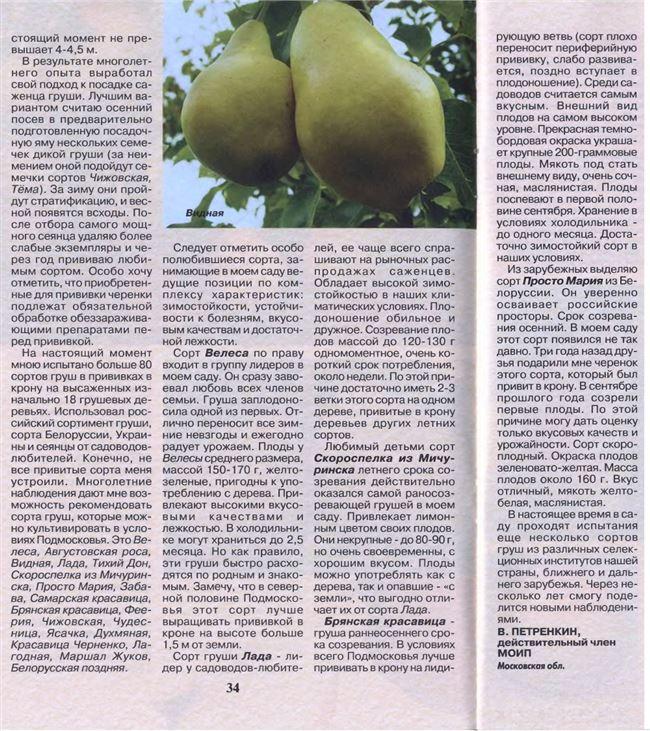 Груша Велеса: описание и особенности выращивания плодового дерева