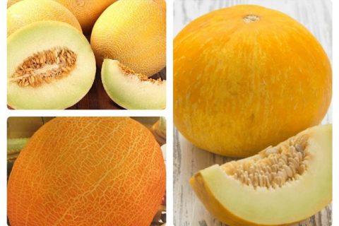 Дыня Апельсинка