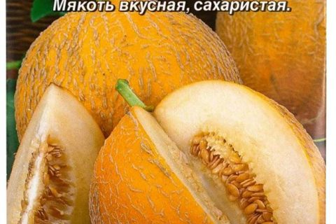 Отзыв о Семена дыни Аэлита «Лакомка» | Лакомимся Лакомкой…