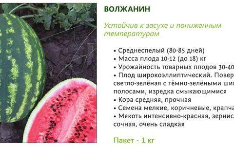 Темп — сорт растения Арбуз