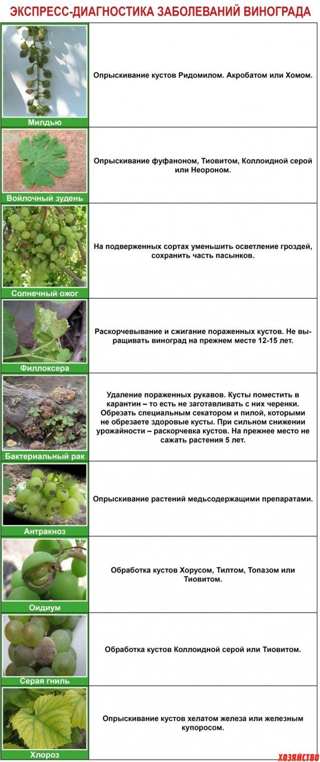 Болезни винограда: характерные симптомы и способы лечения