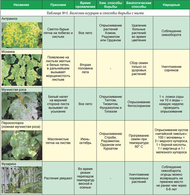 Какие болезни могут поражать тыкву в открытом грунте и чем можно опрыскать культуру для борьбы с вредителями