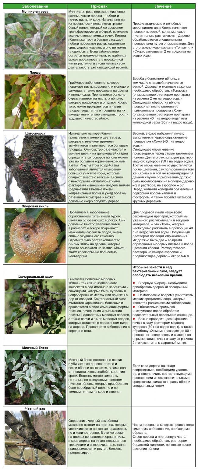Болезни яблони и способы борьбы с ними, чтобы сохранить урожай
