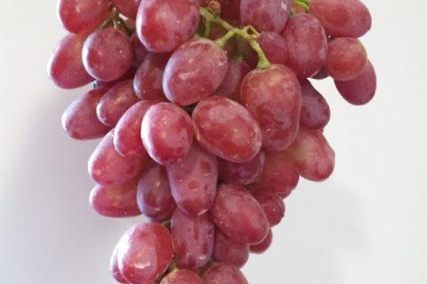 Виноград Гелиос: описание сорта, посадка и уход, размножение, отзывы с фото