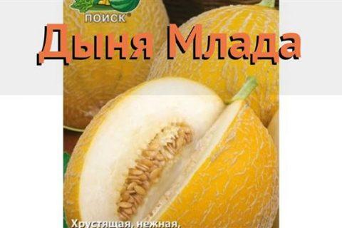 Дыня Млада семена — низкая цена, описание, отзывы, продажа