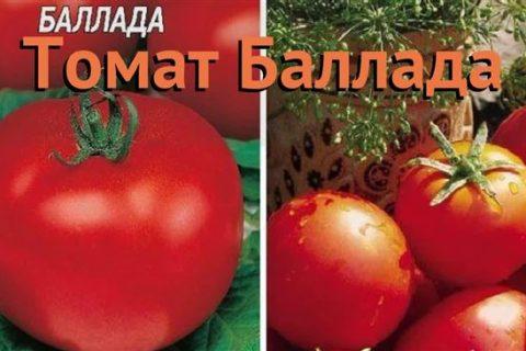 Томат Баллада: характеристика и описание сорта с фото
