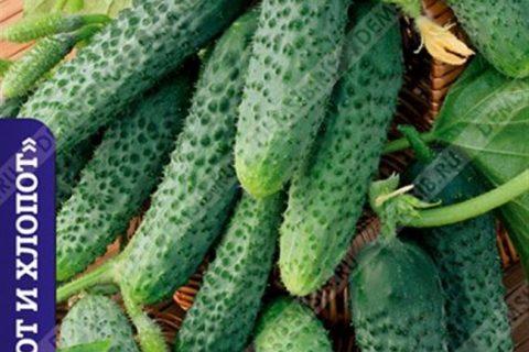 Огурец Авоська (партенокарпический) — Рассада цветов и овощей.