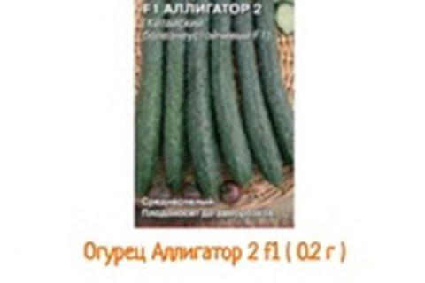 Огурец Аллигатор: описание и характеристики сорта, правила посадки и выращивания