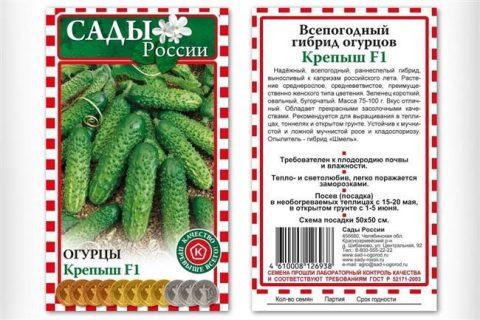 Алтайский Крепыш — сорт растения Огурец
