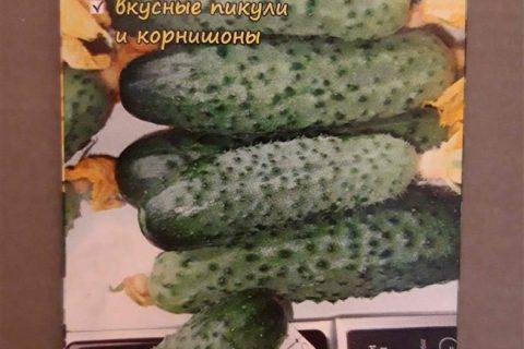 Огурец Андрюша F1: отзывы о посадке и уходе, описание сорта, фото семян