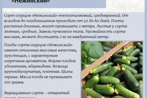 Узнайте плюсы и минусы выращивания огурцов Волжский F1, а также отзывы реальных людей об урожайности куста. В статье вы найдете фото семян, а еще полное описание сорта и его характеристики.