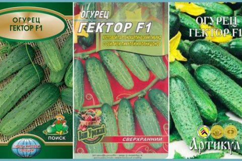 огурец гектор f1: описание, отзывы огородников, урожайность сорта + фото