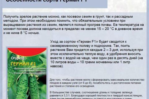 Огурец Пекинский Гурман F1: описание сорта, отзывы садоводов, фото, посадка, уход