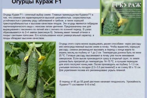 Отзыв о Семена огурца «Аэлита» | Огурцы «Дюймовочка» вкусные, но урожайность низкая.