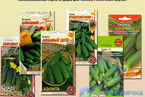 Сорта огурцов: самые урожайные сорта 2021 года с фото. Семена для засолки, салатные, виды и сорта с названиями, советы по выбору