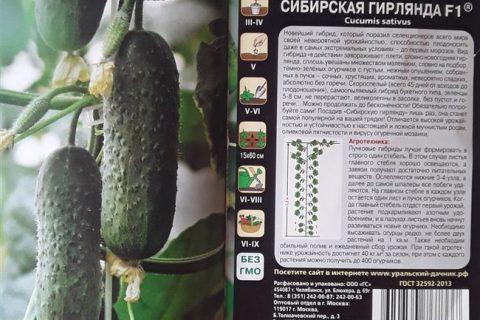 Огурец Зеленая гирлянда F1: описание сорта, выращивание, фото, отзывы