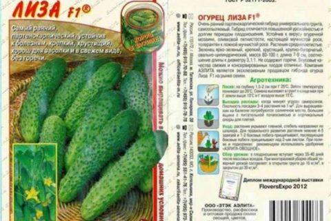 Ника — сорт растения Огурец