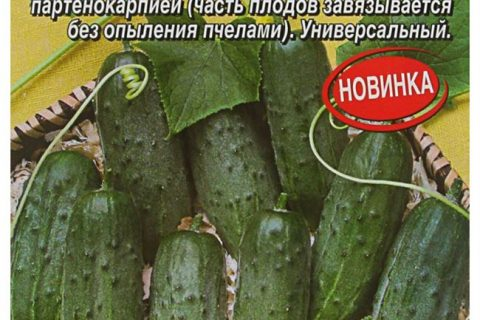 Казаки-Разбойники — сорт растения Огурец