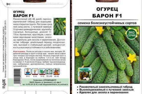 Огурец Капучино F1 — фото урожая, цены, отзывы и особенности выращивания