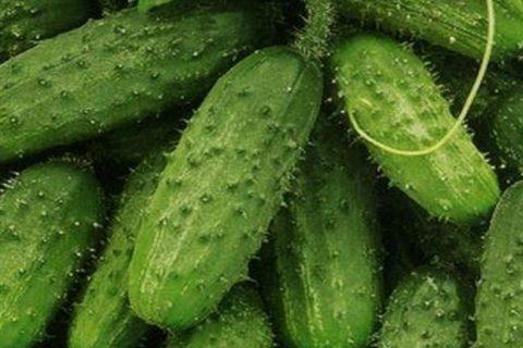 Отзыв о Семена огурца «Аэлита» | Кроха F1. Выращивание огурцов на подоконнике. Сколько дней до первого урожая.