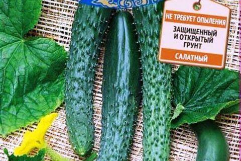 Огурец Любимец Конфуция F1 семена — низкая цена, описание, отзывы, продажа