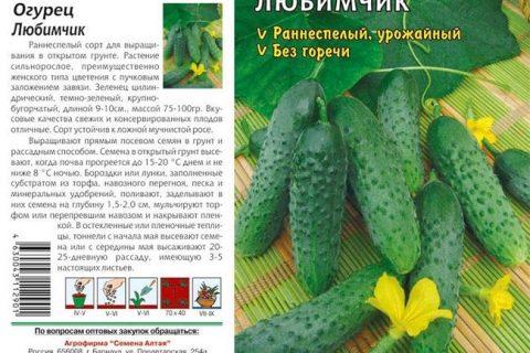 Огурцы Любимчик — описание сорта, посадка и уход, преимущества и недостатки, устойчивость к болезням и вредителям