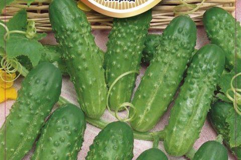 Огурец Хуторок f1: отзывы, фотографии, описание и особенности сорта, урожайность