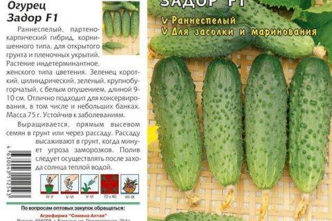 Огурцы Мурашка: описание сорта с фото и отзывами, особенности выращивания