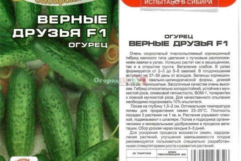 Сапфир — сорт растения Огурец