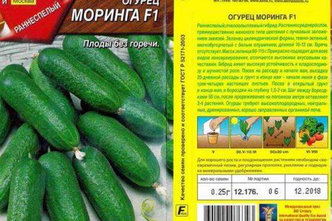 Моринга F1 — Сорта ОГУРЦОВ — tomat-pomidor.com — форум