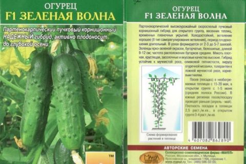 Огурец Настя F1: описание и характеристика сорта, мнение садоводов с фото