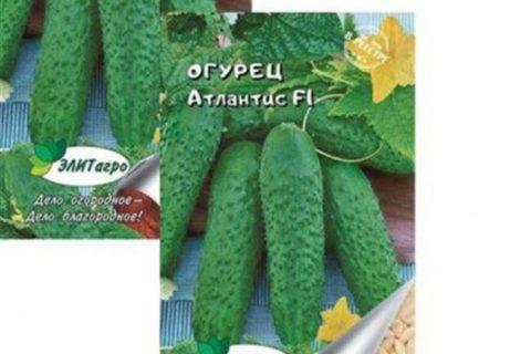 Натали — сорт растения Огурец