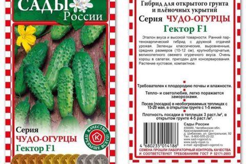 Огурец Наташа f1: описание, выращивание, уход, фото