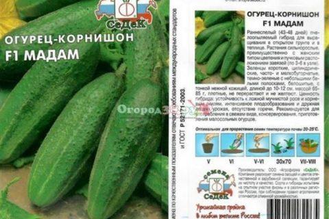 Обзор лучших сортов огурцов, подходящих для выращивания в Сибири. Сравнительная таблица. Какие сорта рекомендуют огородники с опытом?