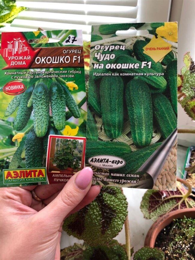 Семена Огурец F1 Домашнее чудо : описание сорта, фото