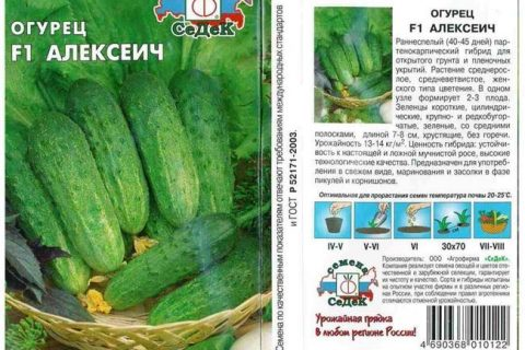 Пакто — сорт растения Огурец
