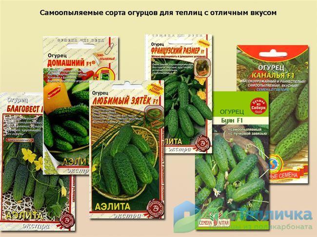 Лучшие сорта огурцов на 2021 год: самые урожайные, вкусные, для теплицы и открытого грунта