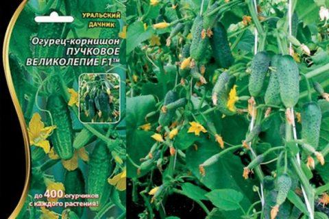 Огурцы свежие защищенного грунта Моё лето Пикколо, ботанический сорт «Квирк» — «На вид странновато, а на вкус скучновато.»  | Отзывы покупателей
